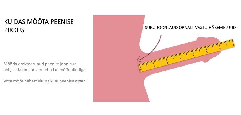 Kuidas mõõta peenise pikkust